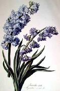 Cornelis van Spaendonck Prints Hyacinth China oil painting reproduction