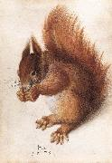 HOFFMANN, Hans Squirrel wf China oil painting reproduction