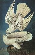 John James Audubon White Gerfalcons China oil painting reproduction