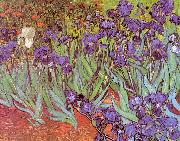 Vincent Van Gogh Irises China oil painting reproduction