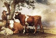 POTTER, Paulus Young Bull zg China oil painting reproduction