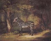George Stubbs A Zebra China oil painting reproduction