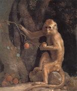 George Stubbs Monkey China oil painting reproduction