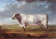 Thomas Alder A Prize Bull China oil painting reproduction