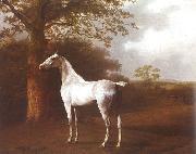 Agasse, Jacques-Laurent White Horse in Pasture China oil painting reproduction