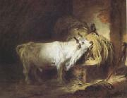 Jean Honore Fragonard The White Bull (mk05) China oil painting reproduction