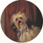 Percy Gray The Artist's Dog (mk42) China oil painting reproduction